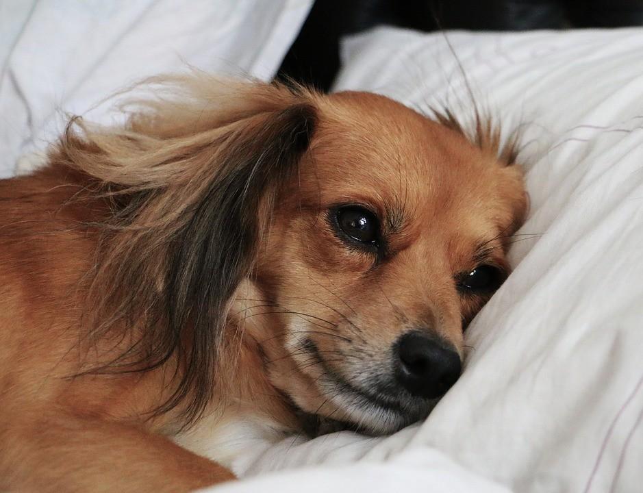"""Antes de dormir, seu cachorro também fica """"preocupado"""" com os problemas do dia"""