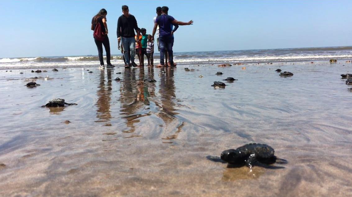 Maior mutirão de limpeza da história faz com que tartarugas retornem à praia após 20 anos