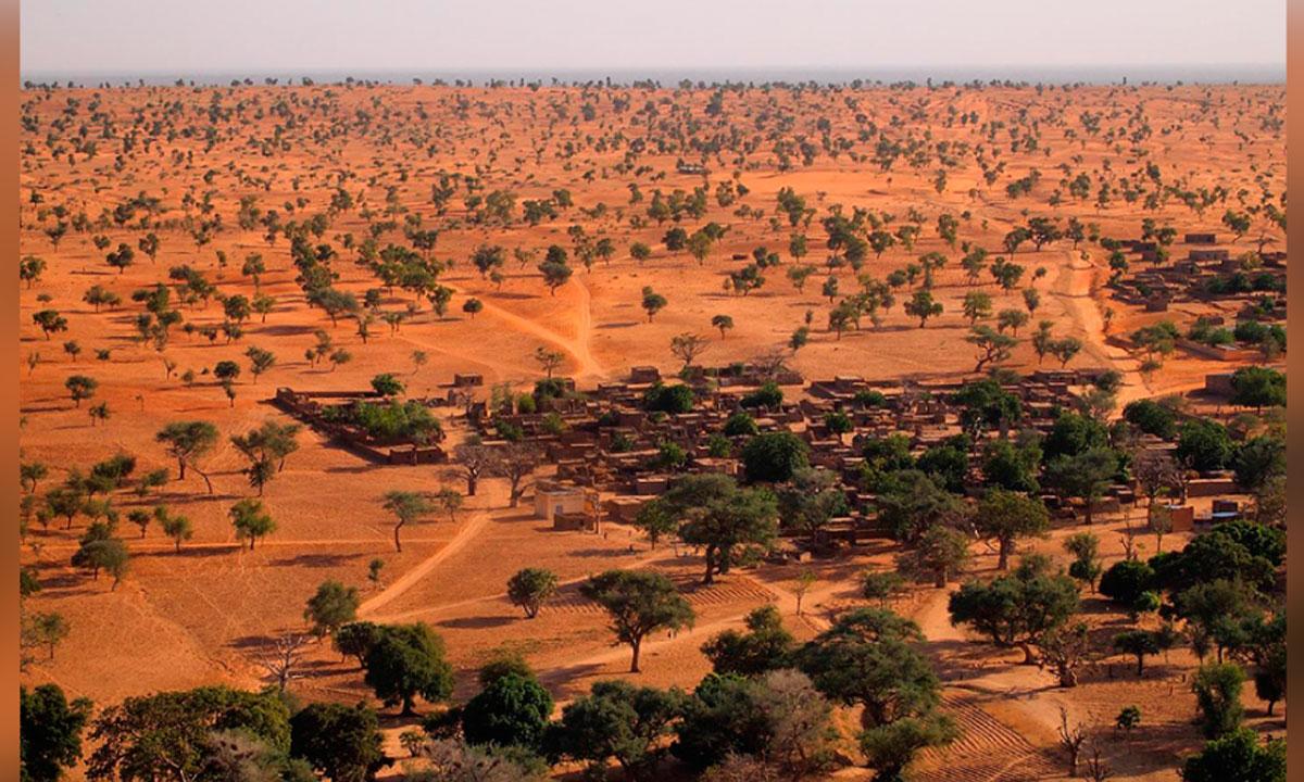 Cientistas descobrram quase 2 bilhões de árvores no deserto do Saara
