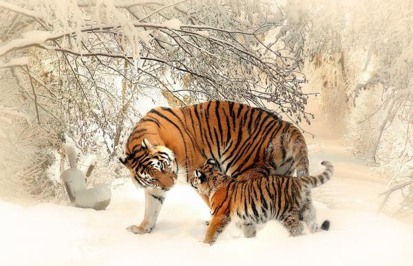 The World's Top Ten Most Beautiful Animals